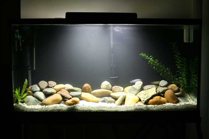 New tank just some water rocks and glass for Rocks for fish tank